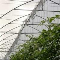 Comienza tu negocio en invernadero hortalizas for Plan de negocios de un vivero de plantas