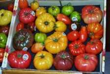 El tomate reliquia vuelve a la fama