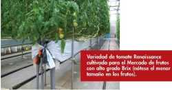 Innovación en tomates
