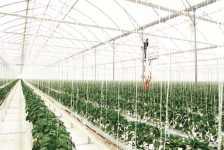 Richel presenta una nueva generación de invernaderos