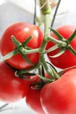 Evita agrietamiento del fruto de tomate