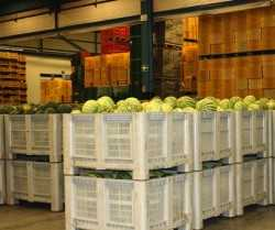 Melon exports