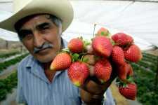 Panorama de exportaciones agroalimentarias mexicanas