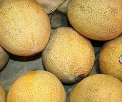 cantaloupes_in_boxes