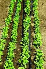 plant row