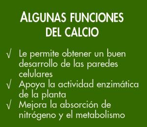 funciones del calcio