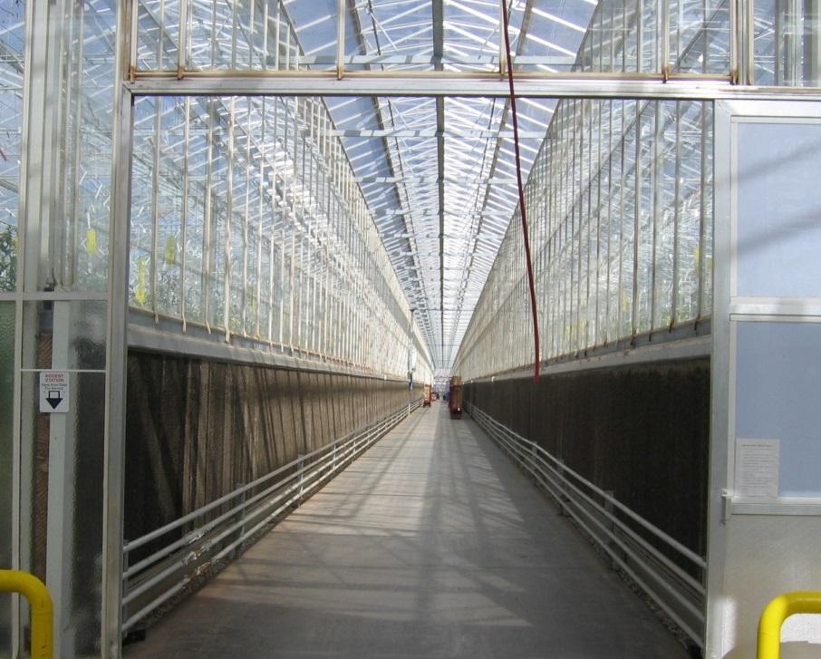 Sistema de enfriamiento evaporativo con muro húmedo desarrollado por CEAC/U. Arizona (Eurofresh Farms).