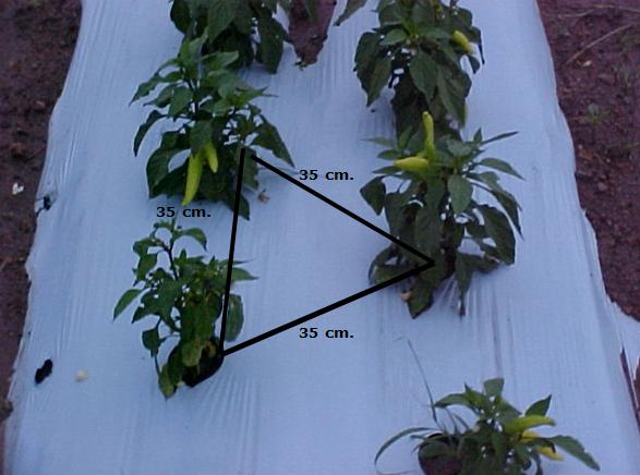 plant distance
