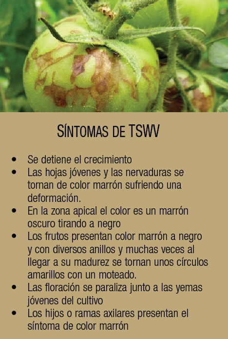 tswv2