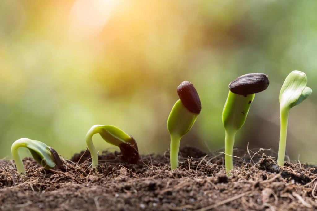 plantillas creciendo