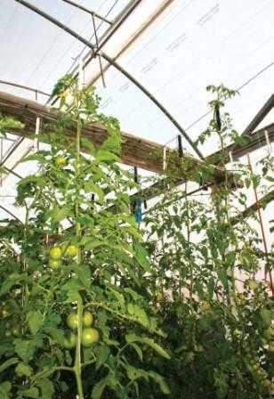 Parámetros Para La Localización Y Construcción De Un Invernadero Hortalizas