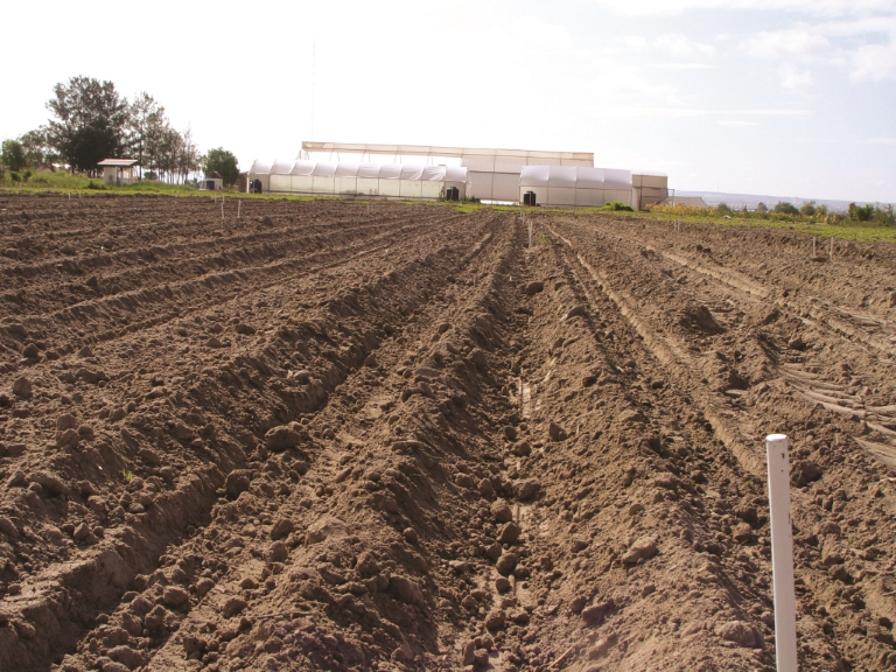 Ventajas del humus de lombriz en el cultivo de maíz