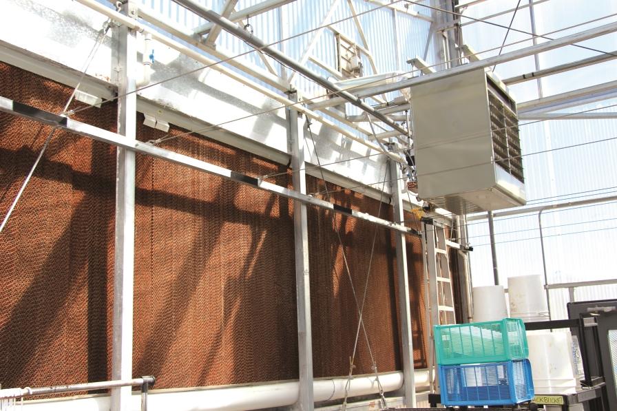 evaporative cooling pads, u of ariz greenhouse