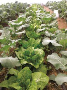 Aplica materia orgánica para fomentar la fertilidad del suelo