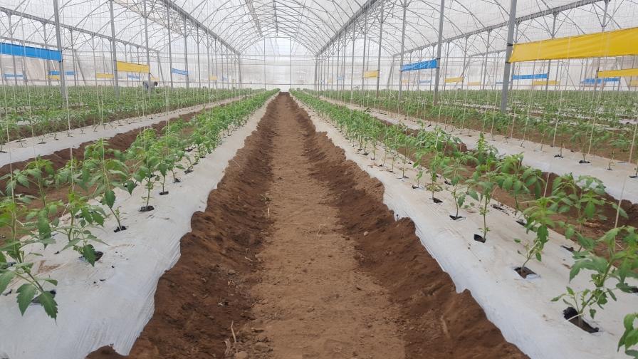 2 operaciones tomateras comparten sus aspiraciones para la comercialización