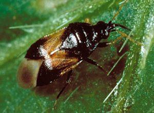 Inicia un control biológico eficaz de ácaros e insectos