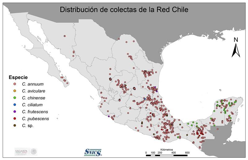 Chiles criollos oaxaqueños en peligro de extinción