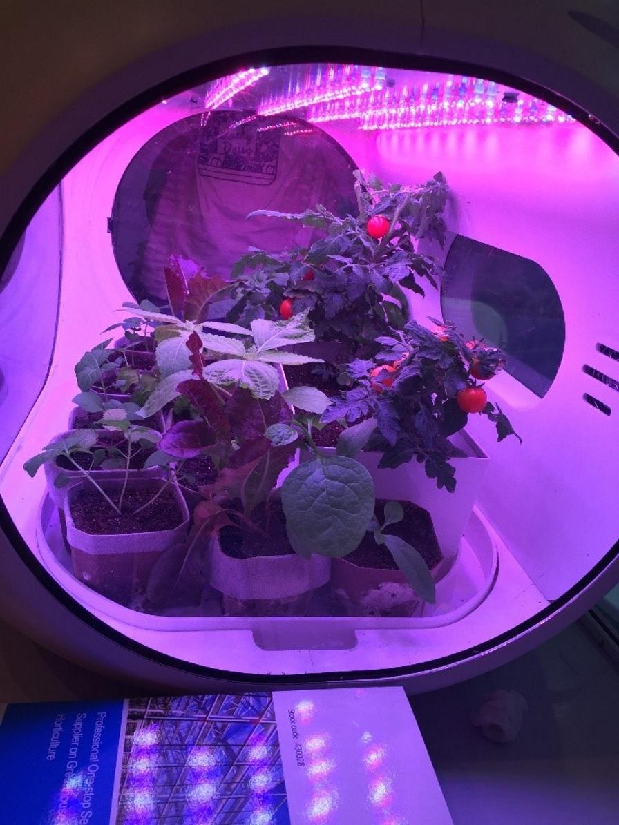 Tecnologías disruptivas, para transformar la horticultura en dietas saludables