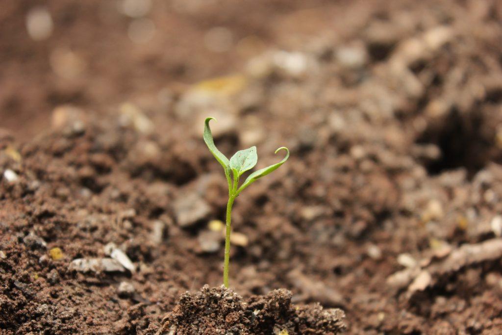 El poder de los micronutrientes
