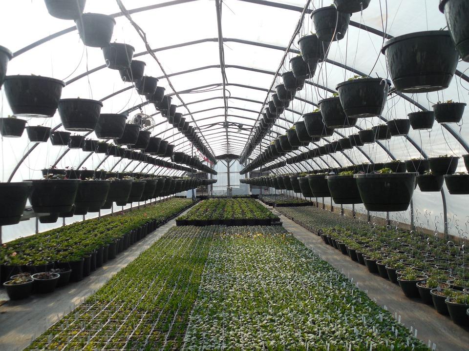 Agricultura protegida en Estados Unidos: ¿amenaza u oportunidad para México?