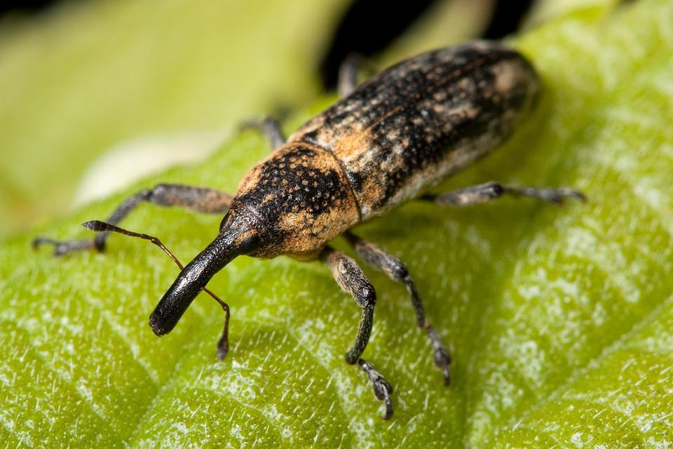 Manejo integral de plagas y enfermedades en ambientes protegidos