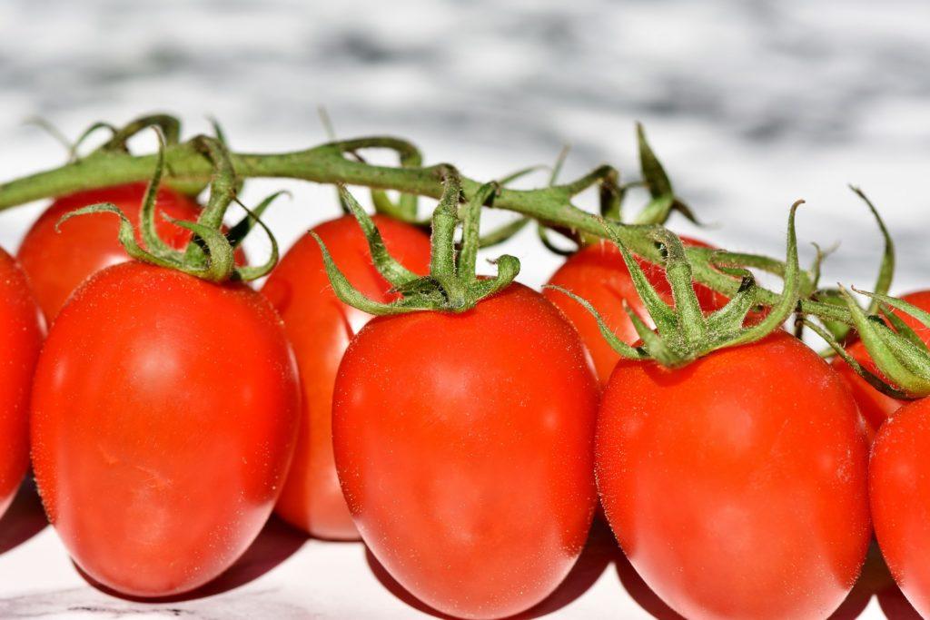 Se consolida México como proveedor de tomate a nivel mundial