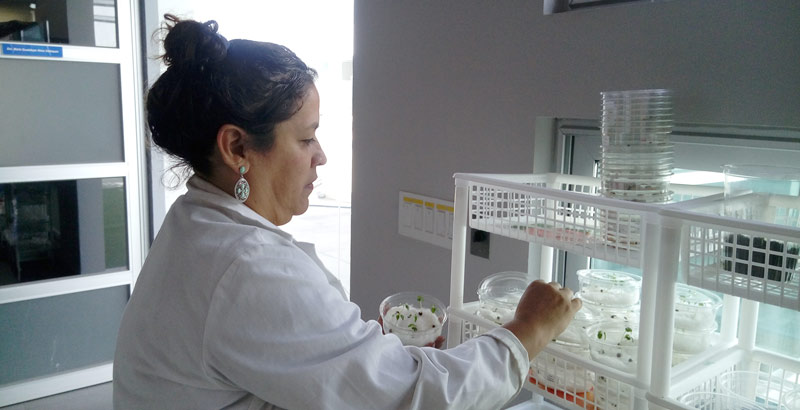 Plasma, el futuro para la producción de alimentos en México