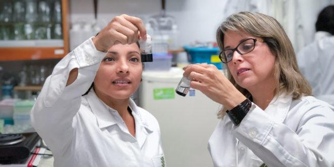Crean nanofertilizante que incrementa la producción agrícola