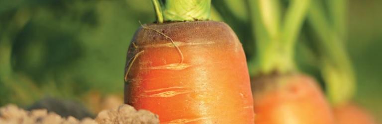 5 formas en que los bioestimulantes contribuyen a la agricultura sostenible