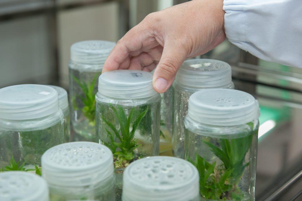 La industria de biológicos en México