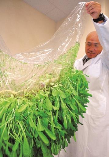Cultivos con láminas de hidrogel