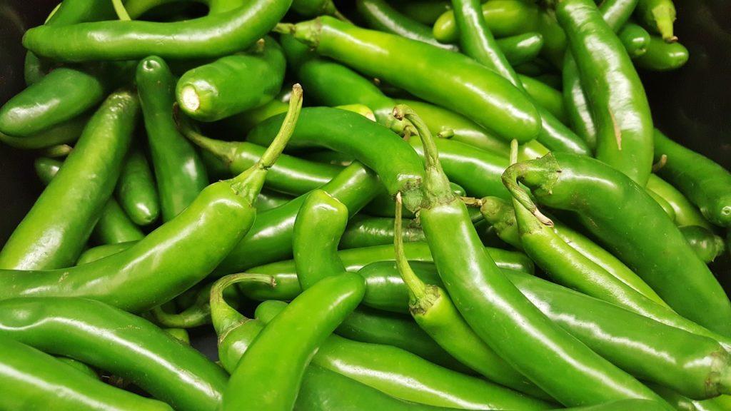 Desarrollan chile serrano con mayor rentabilidad y resistencia a enfermedades