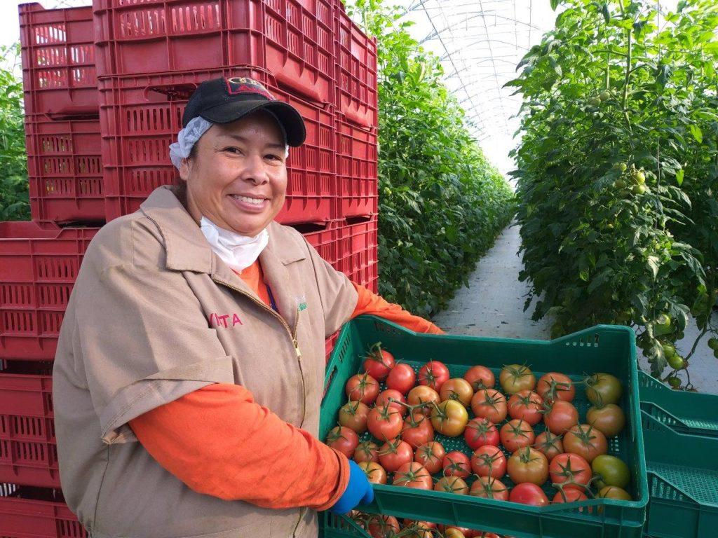 Mantiene EE.UU postura sobre imponer impuesto al tomate mexicano