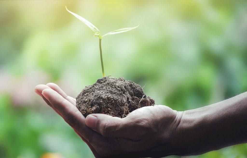 Biofertilizante combina desechos de cultivos de tomate y energía solar