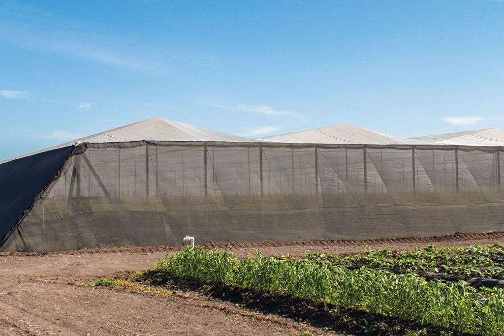 La importancia de los sistemas de agricultura protegida