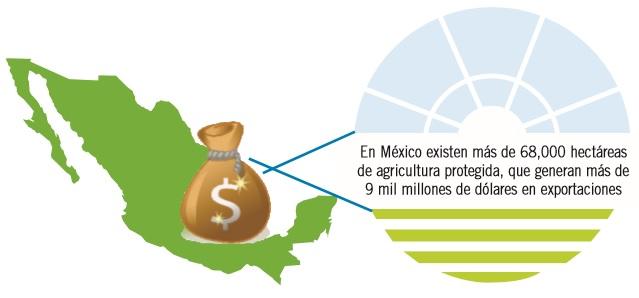 El estado de la agricultura protegida en México: misma historia, diferente industria
