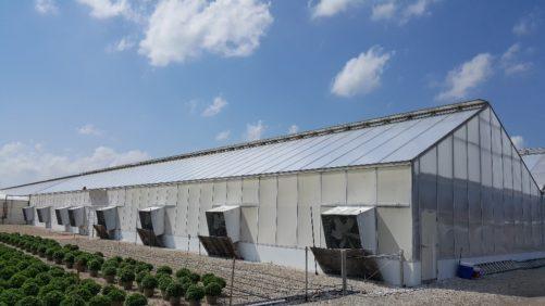 ¿Construir una nueva estructura de invernadero o sólo actualizarla?