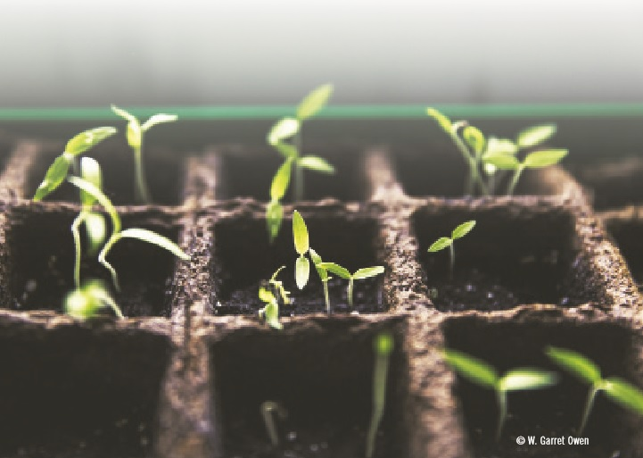 Manejo de la humedad durante la propagación del corte vegetal