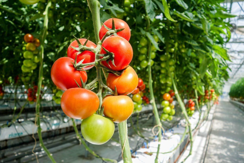 Agricultura intensiva: tan sostenible como los sistemas tradicionales